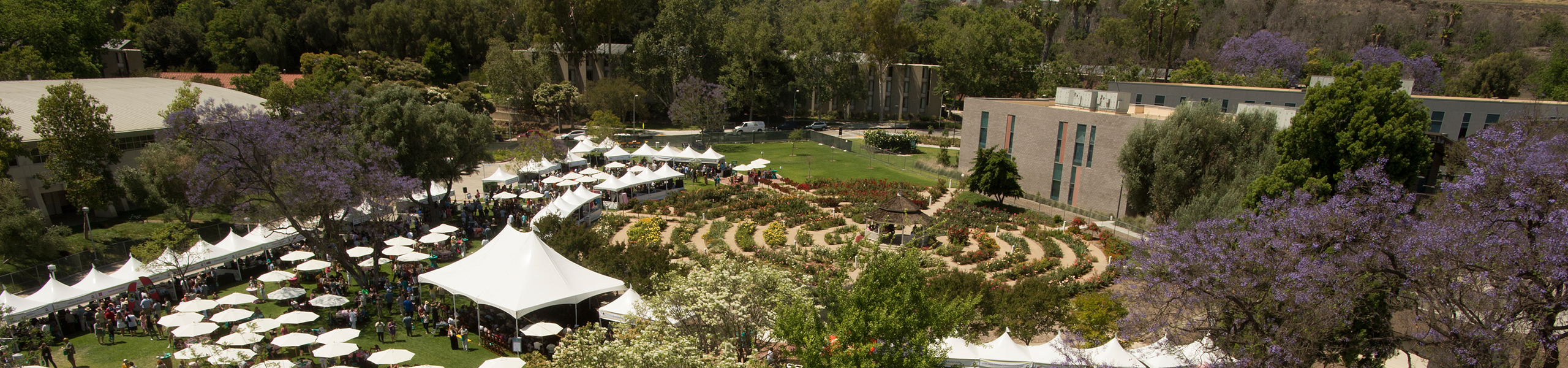 Cal Poly Pomona Rose Garden